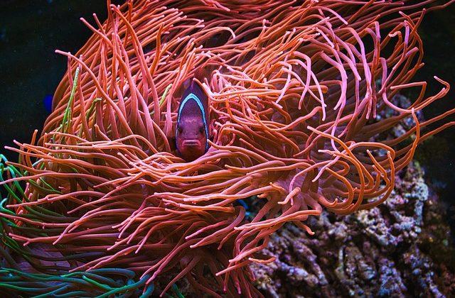 aquarium-4087441_640