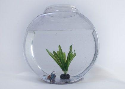 fish-2777953_640