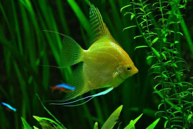 fish-936504_640