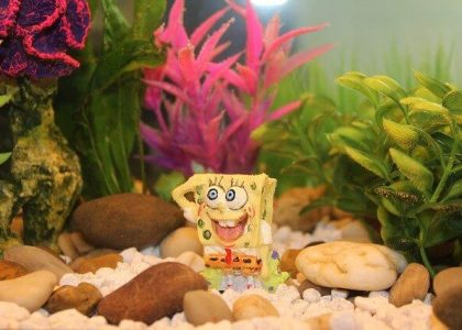 fish-tank-842729_640